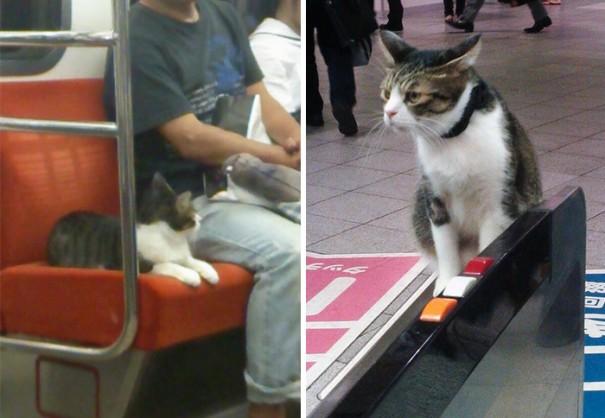 cat-rides-subway-seibu-ikebukuro-line-tokyo-9
