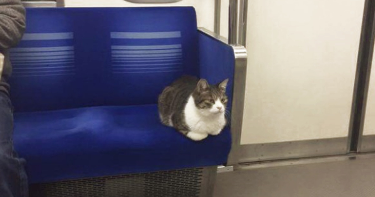 Cat Spotted Regularly Taking Subway In Tokyo All By Himself