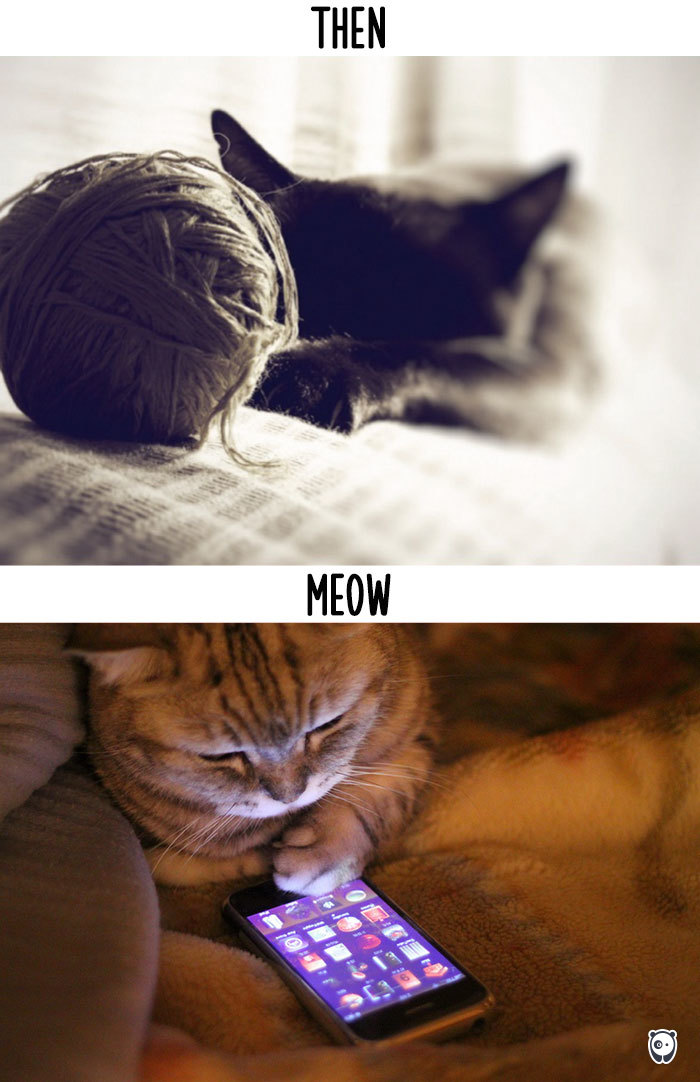 Cats Then And Now