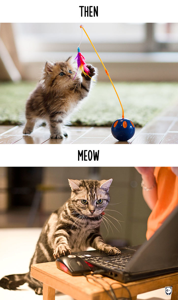 Then Vs Meow How Technology Has Truly Changed Cats Lives