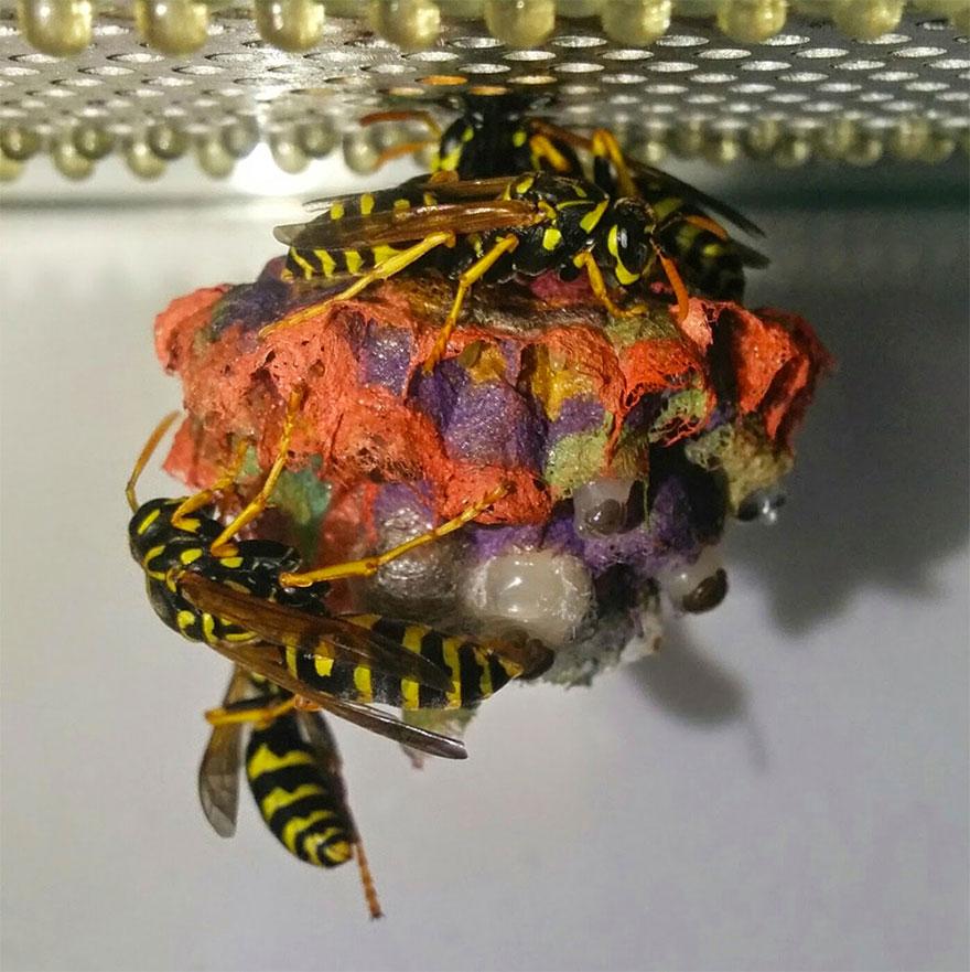 colorful-paper-wasp-nests-rainbow-mattia-mechetti-1