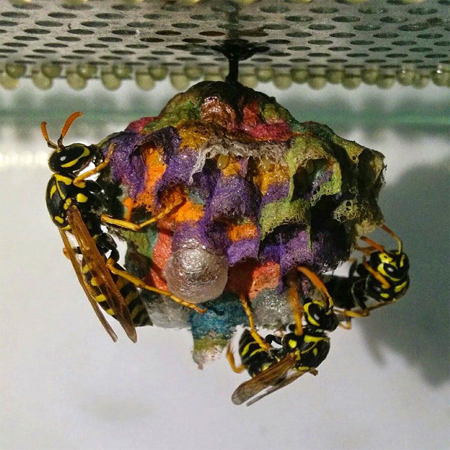 colorful-paper-wasp-nests-rainbow-mattia-mechetti-2