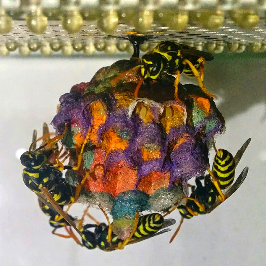 colorful-paper-wasp-nests-rainbow-mattia-mechetti-3