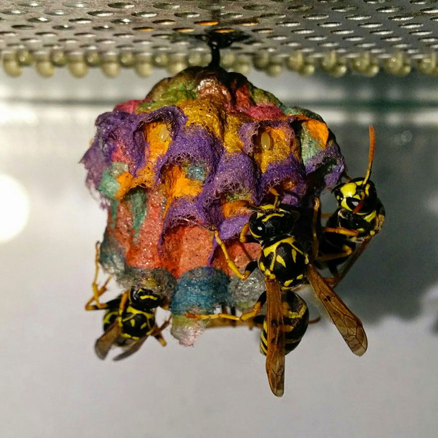 colorful-paper-wasp-nests-rainbow-mattia-mechetti-4