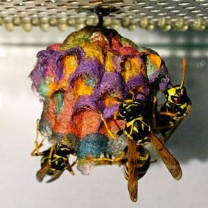 When Wasps Are Given Colored Paper, They Build Rainbow Nests
