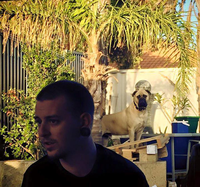 creepy-dog-stalks-owner-cyrus-bullmastiff-lauren-birney-34