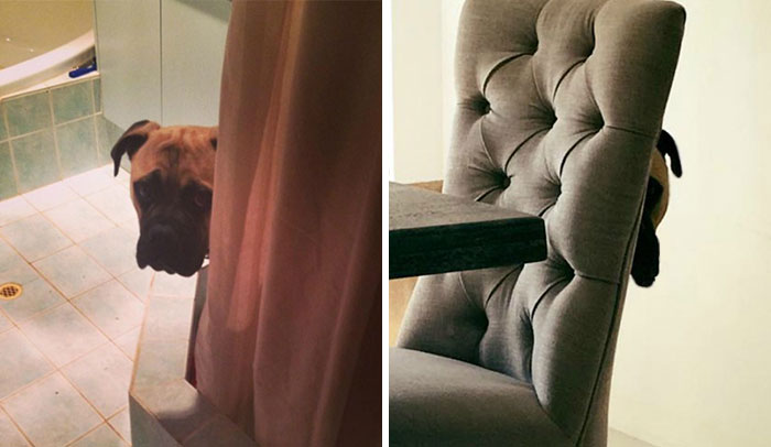 Overly-Attached Dog Stalks His Owner ALL THE TIME