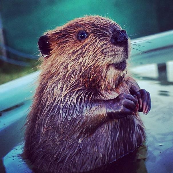 Baby Beaver Christian