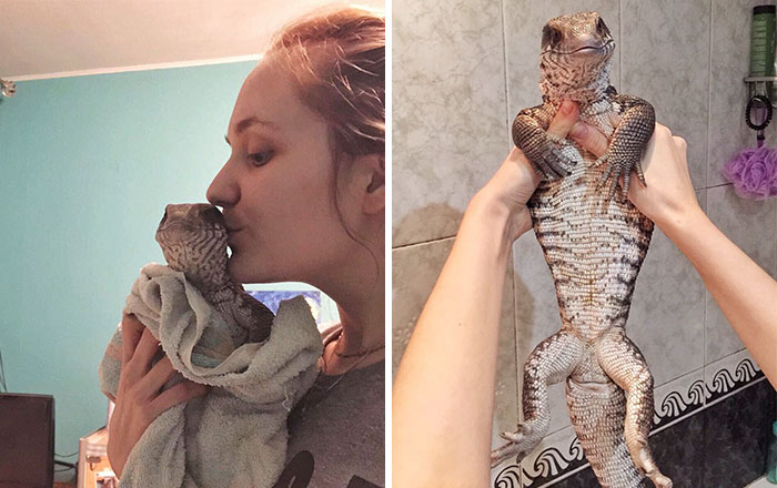 This Lizard Proves That Reptiles Can Be Cute Pets Too