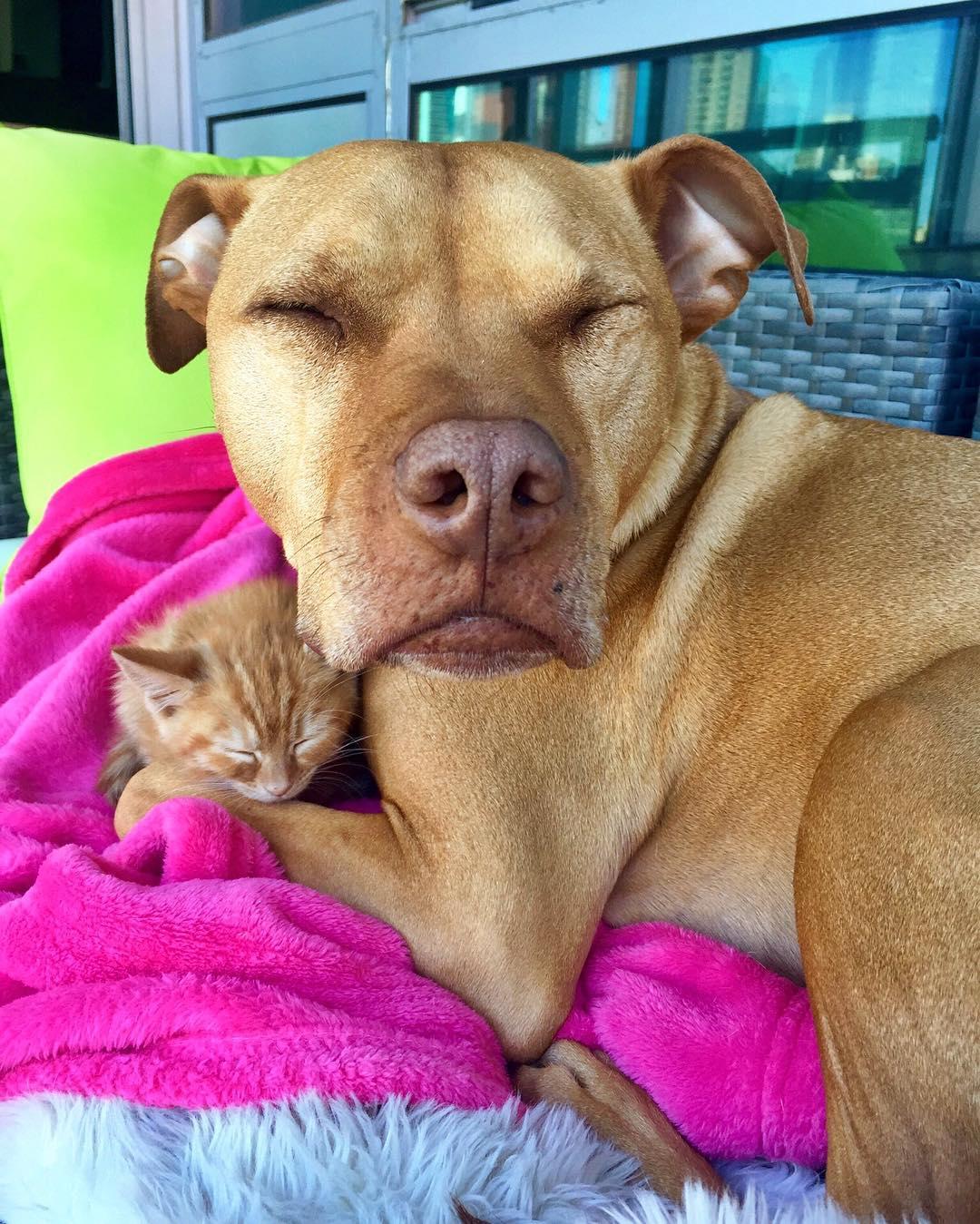 Dog Gets Kitten Video