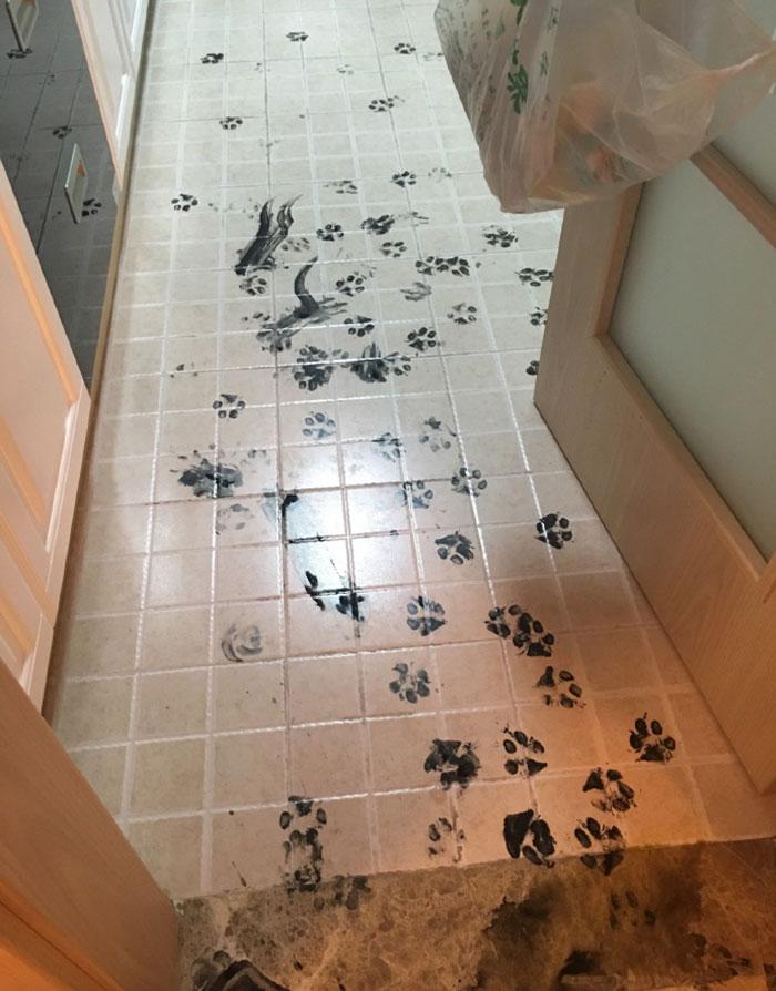 dog-makes-mess-ink-1