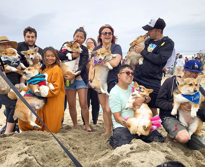 dog-party-so-cal-corgi-beach-day-16
