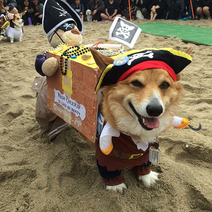 dog-party-so-cal-corgi-beach-day-18