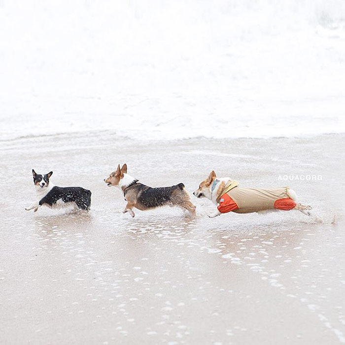 dog-party-so-cal-corgi-beach-day-6