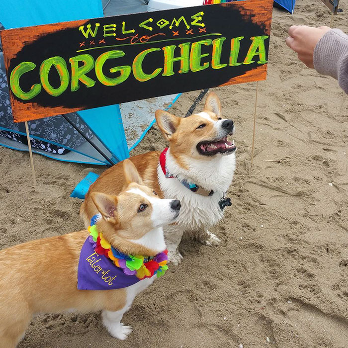 dog-party-so-cal-corgi-beach-day-8