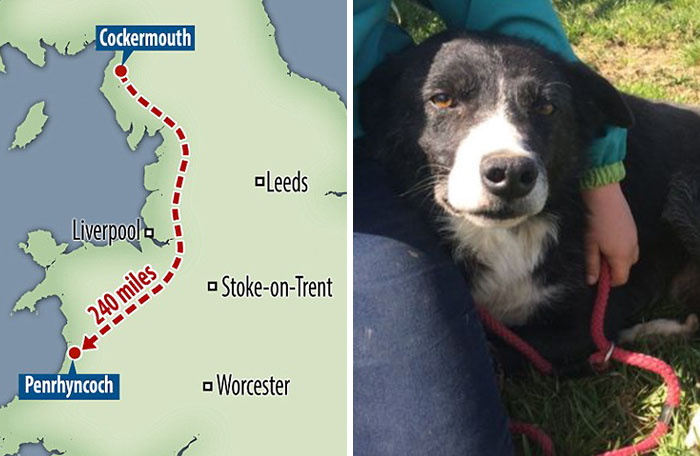 Homesick Dog Walks 240 Miles In 12 Days To See His Owner Again