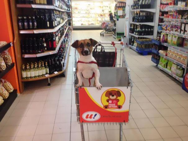 dog-rides-cart-supermarket-unes-italy-1