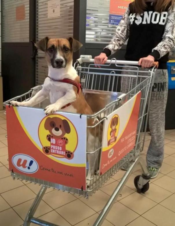 dog-rides-cart-supermarket-unes-italy-3