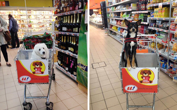 dog-rides-cart-supermarket-unes-italy-6
