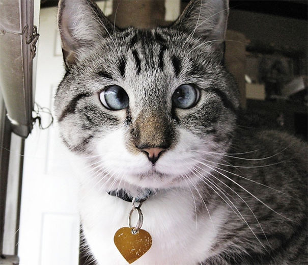 Spangles The Cross-Eyed Cat