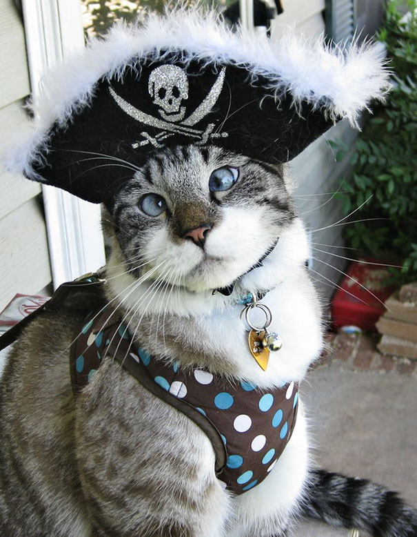 My Cross Eyed Pirate Kitty