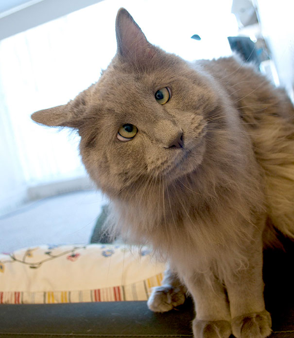 Aww, Meet Gus, The Cross-Eyed Cat