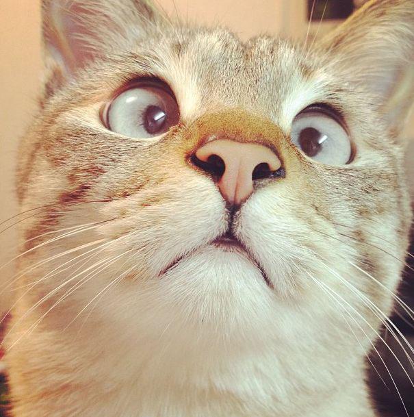 Derpy Cat