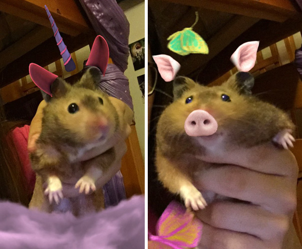 Snapchat Filters With My Hamster