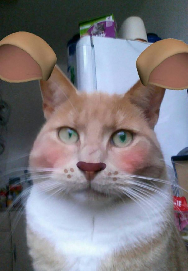 When Snapchat Turn Your Cat Into A... Hamster?