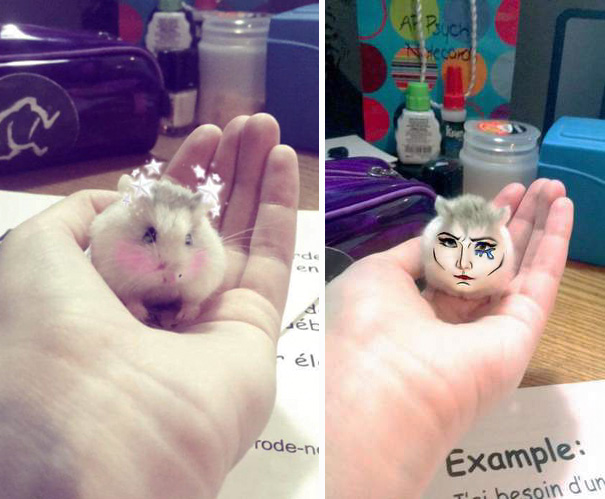 My Friend Put Snapchat Filters On Her Hamster