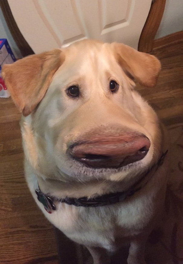 My Dog Looks Like Dug From Up With This Snapchat Filter