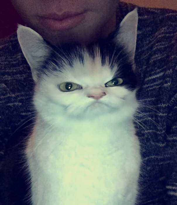 Don't Think My Cat Is Appreciating The Snapchat Filters