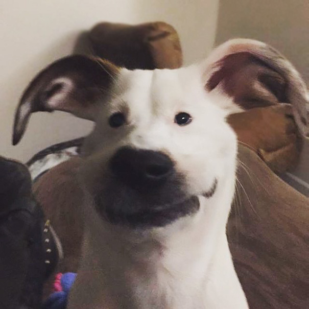 So I Tried Those New Snapchat Filters On My Dog