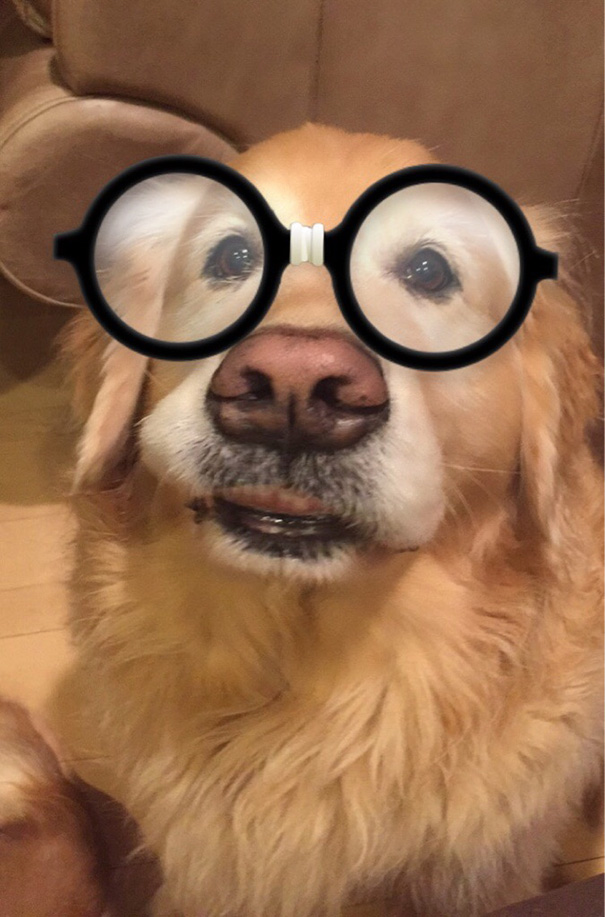 I Decided To Test The Snapchat Filters On My Dog