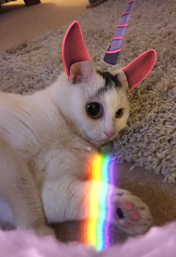 The Joy Of Snapchat And Cats. Meet Charlie The Unicorn
