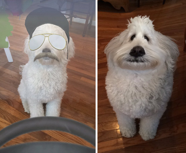 Guys You Can Use Those Fancy Snapchat Filters On Your Pets And It's The Best Thing Ever