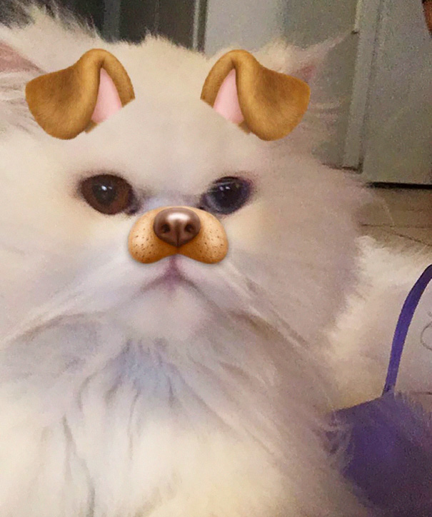 Now I'm A Cat-dog