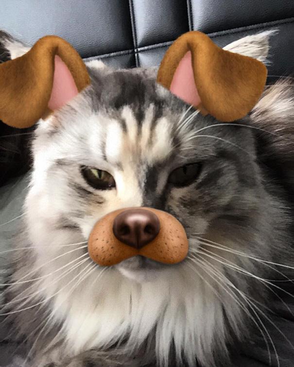 I'm Cute As A Dog Too!