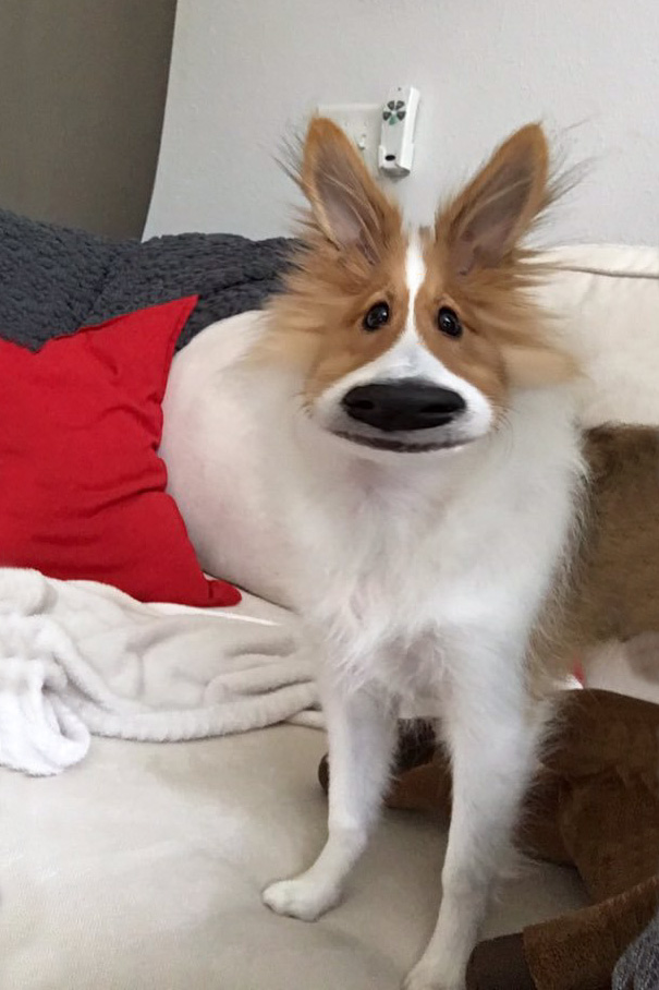 The New Snapchat Filter Worked On My Dog. I'm Screaming!