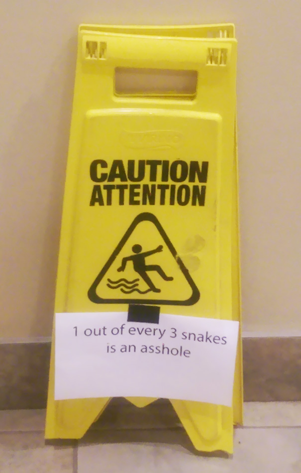 1 Out Of Every 3 Snakes