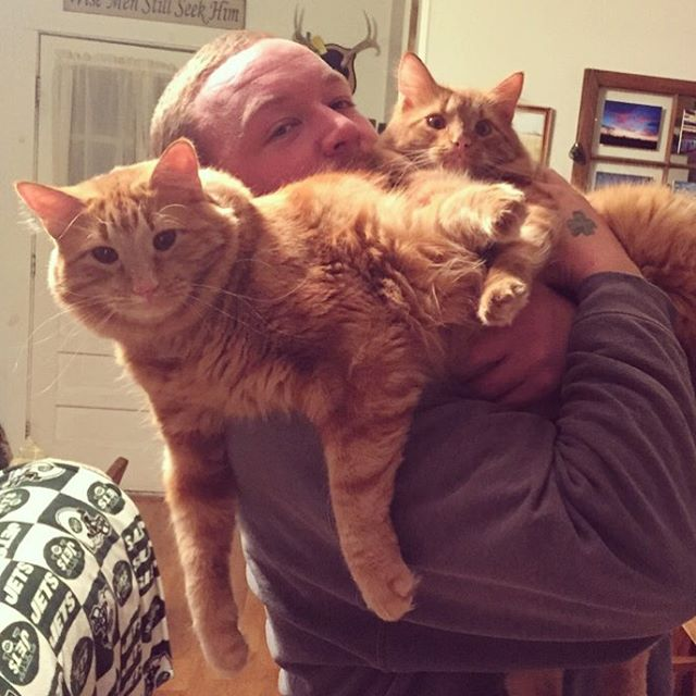 ginger-cat-adopts-mini-me-evin-minnie-37