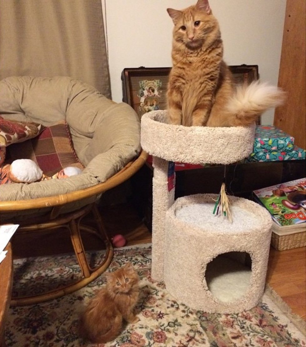 ginger-cat-adopts-mini-me-evin-minnie-39
