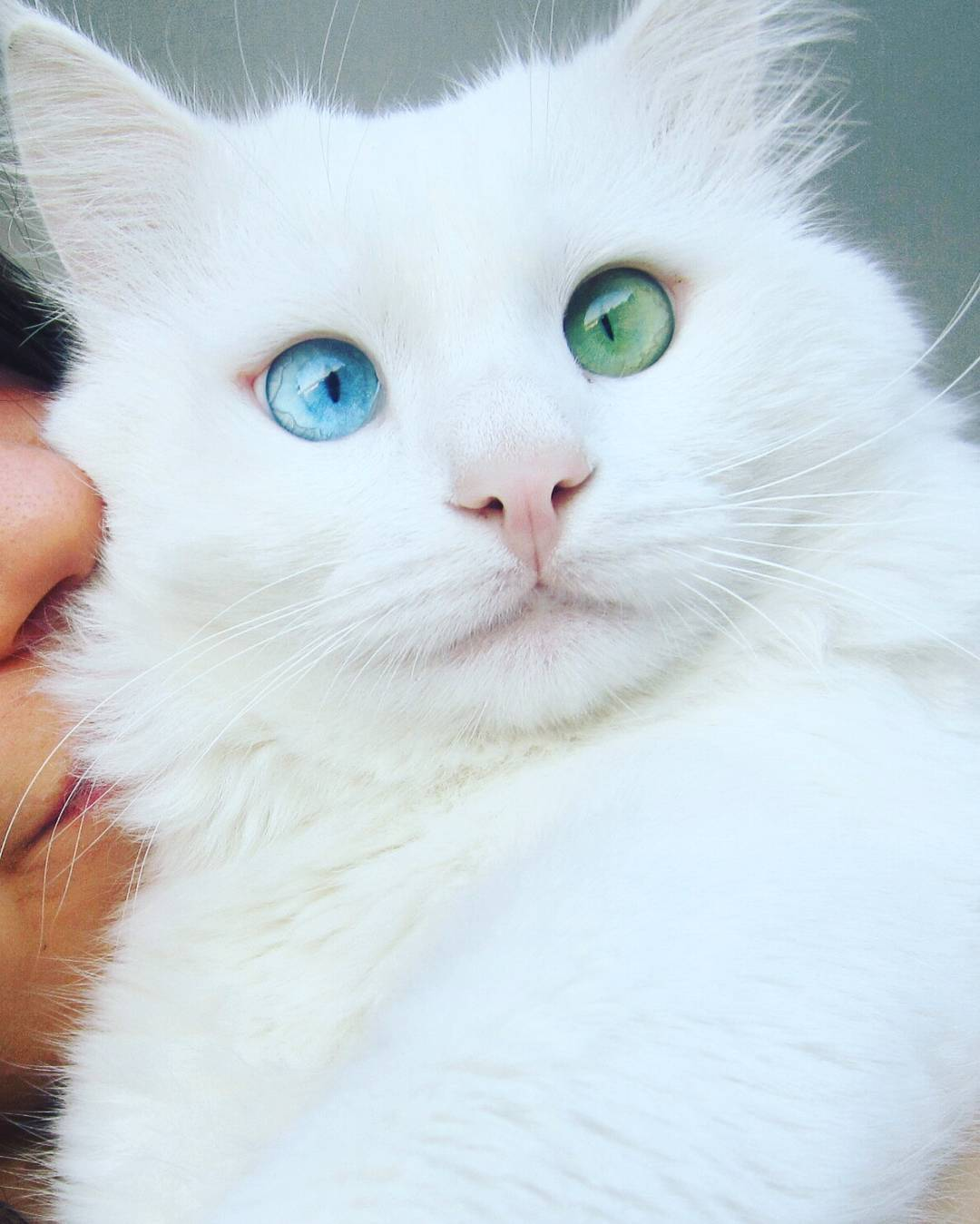 heterochromia-cat-cross-eyed-alos-5