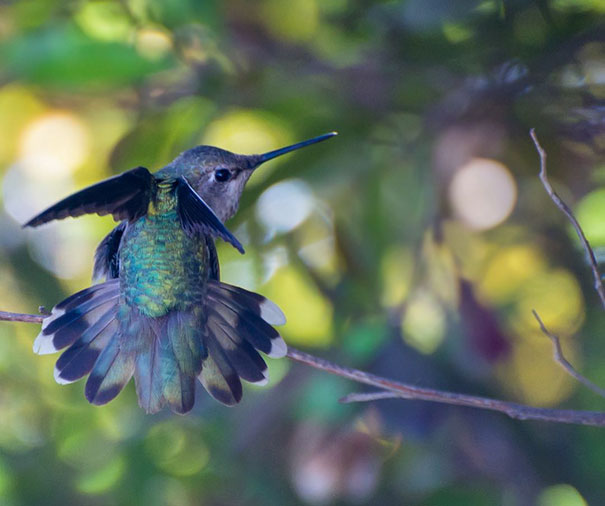 This Instagrammer Captures The Tiny Beauty Of Hummingbirds In Her Backyard