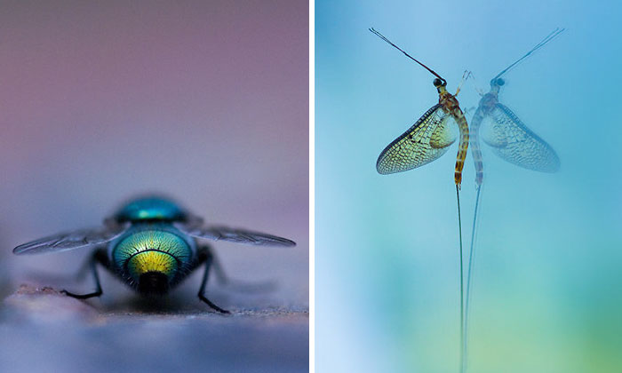 I Photograph Small Animals That Are Usually Overlooked