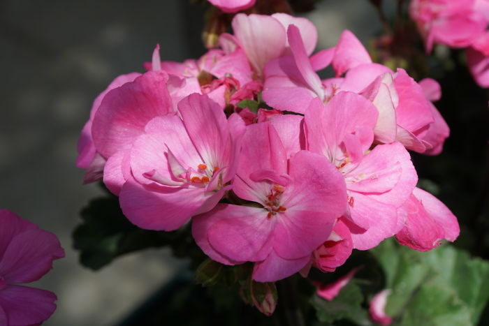 Flower…