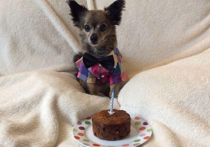 Timmy Dogs 10th Birthday