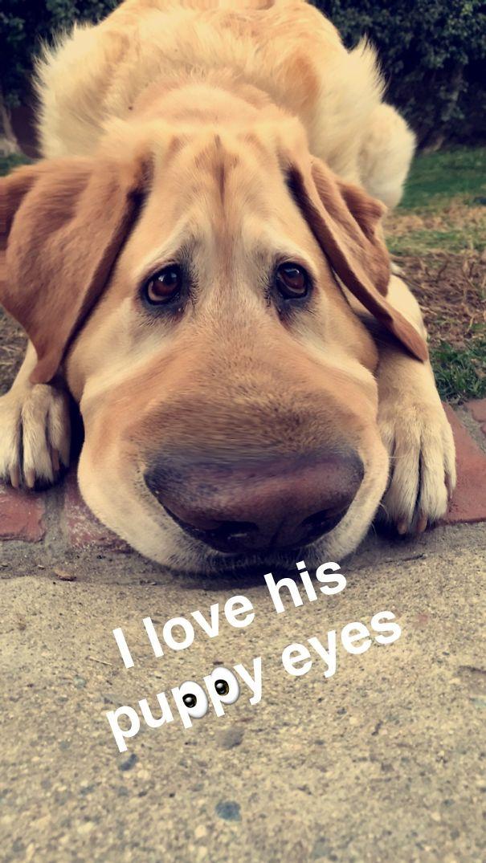 Snapchat Bruno Petsnap