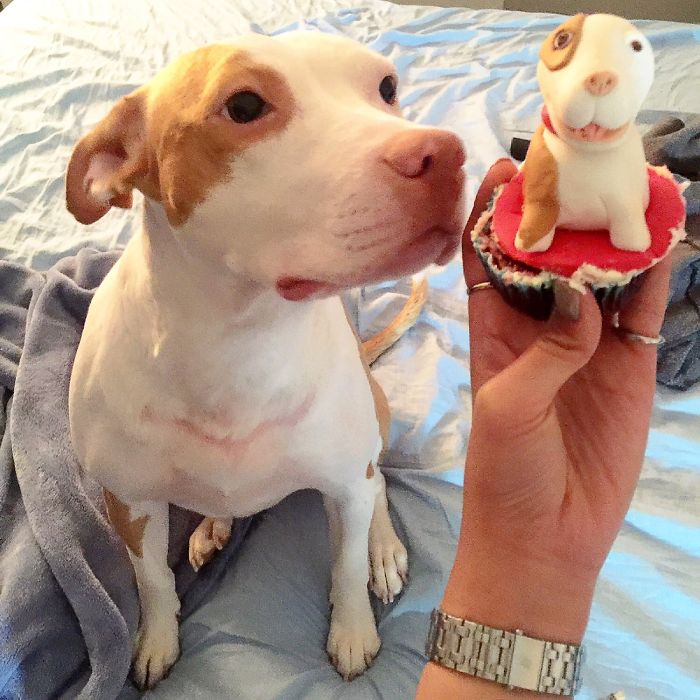 Gummy The Pitt Says She Wants To Eat Herself!