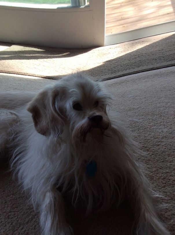 Alien Dog! I Still Love Him Though!
